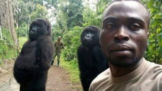 Ingagi zo mu birunga muri Kongo zahagaze zemye zifotoza muri 'selfie'